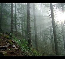 Washington  Granite Mountain I by psychedelicmind