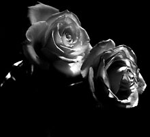 Black Roses by Juilee  Pryor