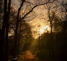 Take Nature with you II by Joey Kuipers