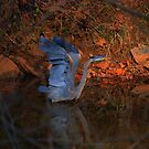 Great Blue Heron by Robert Burns Miller