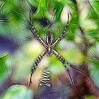 Skinny Garden Spider by Tracy Deptuck