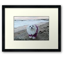 Snowdrop the Maltese - The Beach in Winter  Framed Print