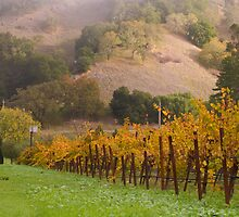 Vineyard by EvaMcDermott
