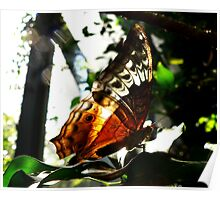 Backlit Butterfly Poster