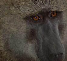 Ape Art by ApeArt