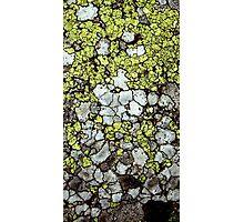Alpine lichen Photographic Print