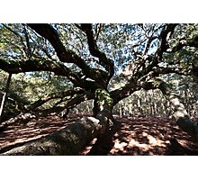 Angel Oak Photographic Print