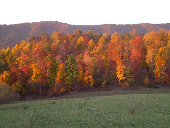 COLORS OF FALL by Cathy Cale