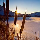 Frozen Cattail Sunrise by DawsonImages