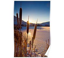 Frozen Cattail Sunrise Poster