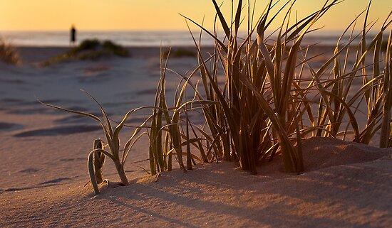 Coastal roaming by Louise Cooke