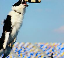 Dock Diving • Border Collie by 2woofs-1meow