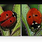 Our Lady&#x27;s Bugs by Bonnie T.  Barry