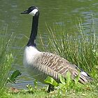 mother goose by brucemlong