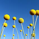 Sunshine on a Stick by Leeo