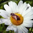 Bee and Daisy by © Joe  Beasley IPA