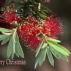 Merry Christmas - Australian Bottlebrush by Joy Watson