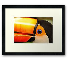 Quaint Bird: Portrait of a Toco Toucan at Iguassu, Brazil. Framed Print