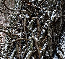 Vines & Flurries by Rod  Adams