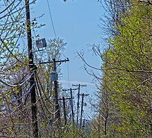 Telephone Poles by Susan S. Kline