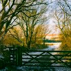 winter wonder land by kathywaldron