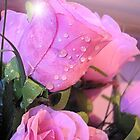 Pink Raindrops by Melissa Contreras