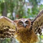 Spread Those Wings by byronbackyard