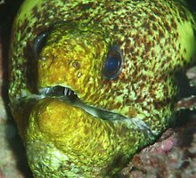 Moray eel by blew12bandit