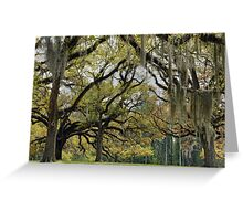 Oaks of St. Francisville Greeting Card