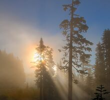 Forest Dawn by DawsonImages