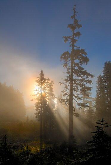 Forest Dawn by DawsonImages