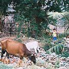 Kampot, Cambodia by Allison Lane