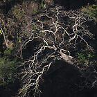 tropical nature - naturaleza tropical by Bernhard Matejka