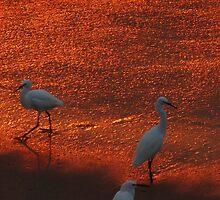 sunset in a paradise - puesta del sol en un paraiso by Bernhard Matejka