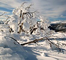 Frozen burnt snowgum by Kath Cashion