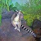 One Cool Lemur by Jeff  Burns