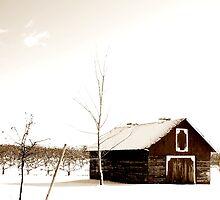 orchard's whiteout by Andrew Hoisington