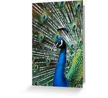 Pride of the Peacock Greeting Card