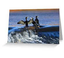 Cormorants at Exeter Quays Devon, UK Greeting Card