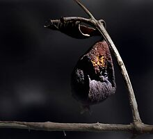 Dried Guava by Carlo Cesar Rodillas