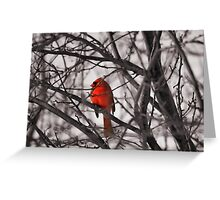 Just Because I'm Bright Red Doesn't mean you need to stop and shoot me... Greeting Card