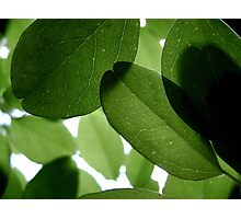 It ain't easy being Green Photographic Print