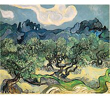 Olive Trees by Vincent van Gogh. Famous landscape oil painting. Van Gogh's unique swirling painting style. Photographic Print