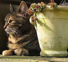 Cat by douwe