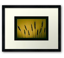 GOLDEN WHEAT  Framed Print