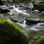 Smoky Mountain Stream by Ray Thacker