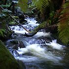 creek near Waratah, Tasmania (Australia) by gaylene