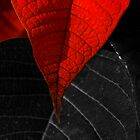 Poinsettia Leaves by Jan Cervinka