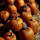 Pumpkins by Rachel Valley