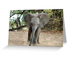 DON'T COME ANY CLOSER! -THE AFRICAN ELEPHANT – Loxodonta Africana Greeting Card